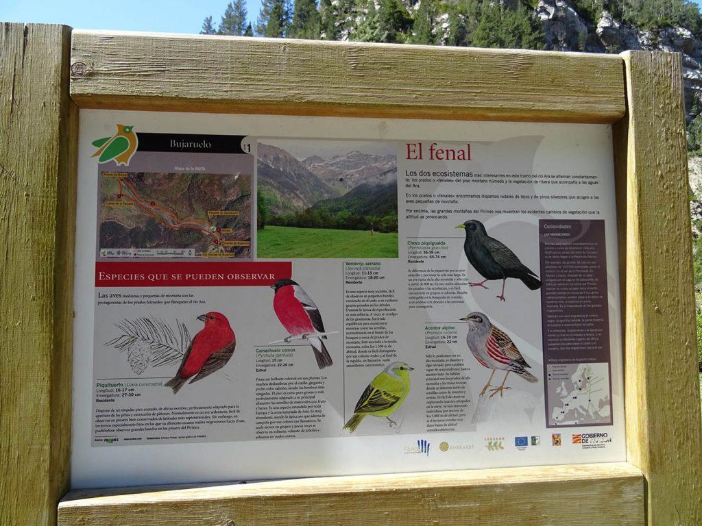 Pajaros ruta ornitologica Bujaruelo